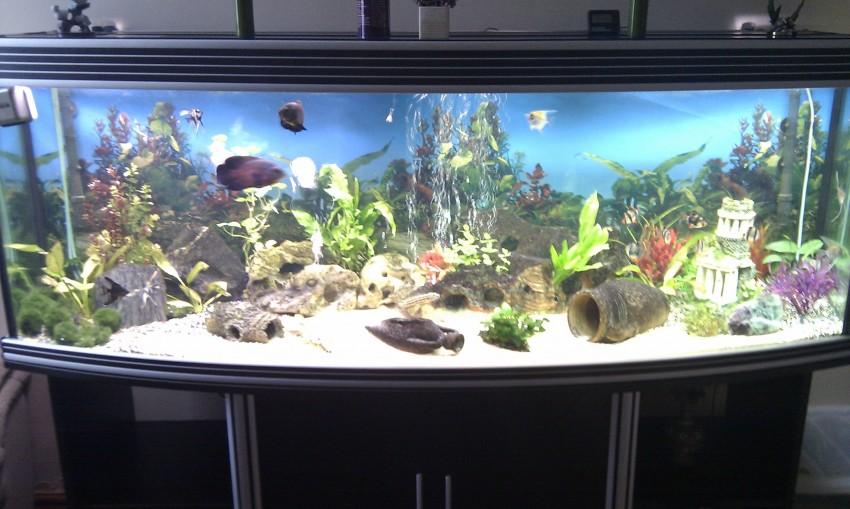 Как изготовить аквариум самому