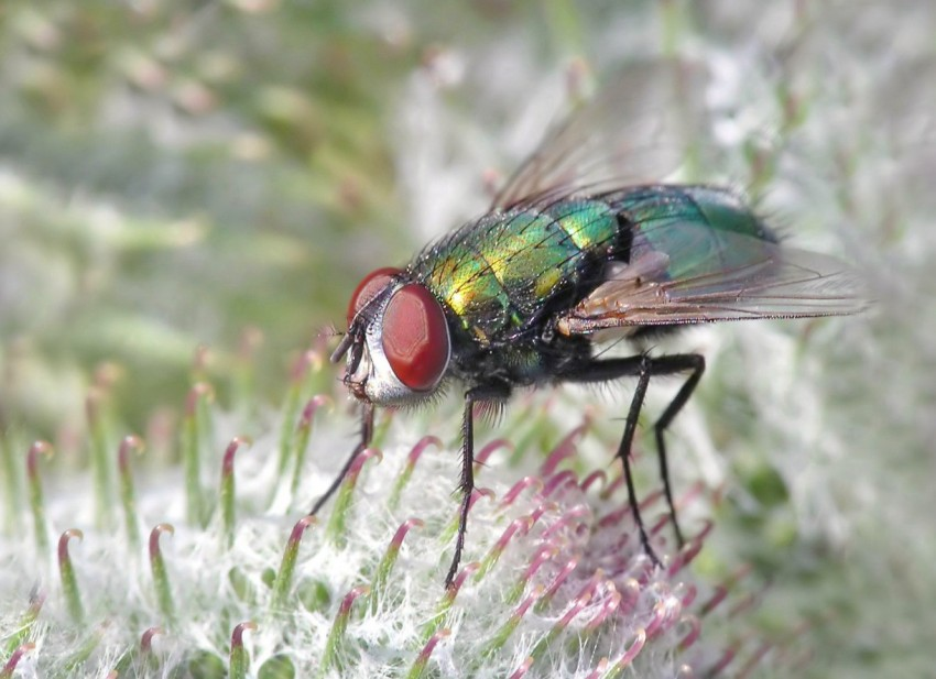 Ловушка для мелких мух